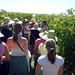 Grape Vineyard Tupungato 1968