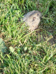 A Gopher came to check out the happenings