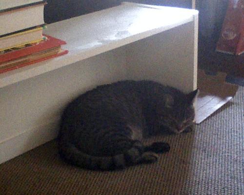 Sleepy Alexander