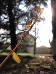 harmony (musicgirl_4) Tags: sun plant nature beautiful pretty ray peace harmony sunrays sunray