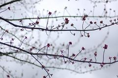 ლ (☼warm winds≈) Tags: flowers spring notes branches blooms rhythm neutral utatafeature pentameter