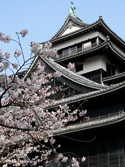 Sakura Cherry Blossoms at Matsue Castle (James Alexander Jack) Tags: pink flowers blue sky white black flower tree castle beautiful japan cherry japanese picnic blossom seat blossoms 1600 sakura shimane lovely matsue hanami plover daimyo prefectural