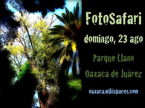 FotoSafari in Oaxaca