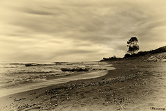 Dreaming of the sea! (M@@n) Tags: sea tree sepia waves iran pentax wave shore mazandaran   caspiansea coth     k100d  platinumheartaward  casoian   pentaxart