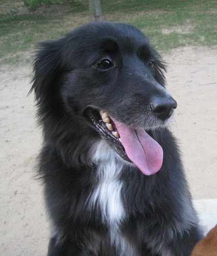Recent photo of my dog Pepper  WIKIPEDIA  DOG  definition