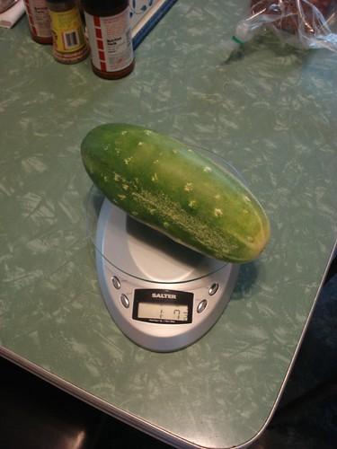 Large cucumber!