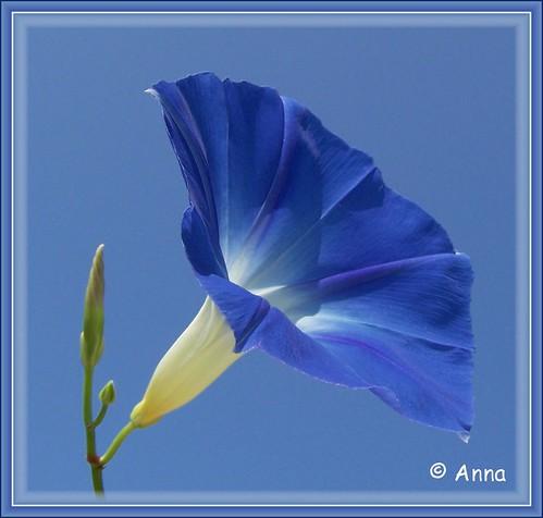 ~ BLUE ON BLUE ~ ©