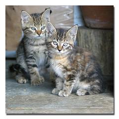 Kitties (Johann THOMAS (Kideclic)) Tags: pentax 180 iso1600 f63 tamron70300 k100d
