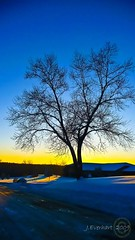Winter Sunset ( julev69  200,000+ views ~THANK YOU!!!) Tags: winter nature silhouette soft vivid bluesky wintertime goldensunset 2009 baretrees breathtaking buttery winterphotos nakedtrees winterphotography platinumphoto colorphotoaward abovealltherest breathtakinggoldaward vosplusbellesphotos artofimages jeverhart julev69 bestcapturesaoi breathtakinghalloffame