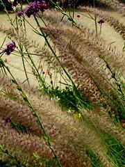 Grass (ale.ian) Tags: grass erba fiori piante parigi