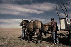 Old Consort Hospital Trail Ride (TimGoos) Tags: horse wagon ride trail alberta arabian percheron neutral consort faved