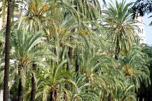 palm-trees-valencia