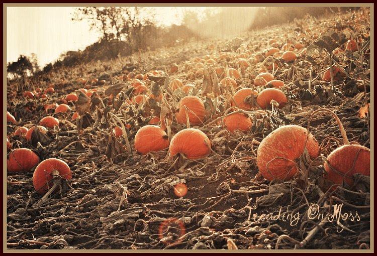 Pumpkin Flare
