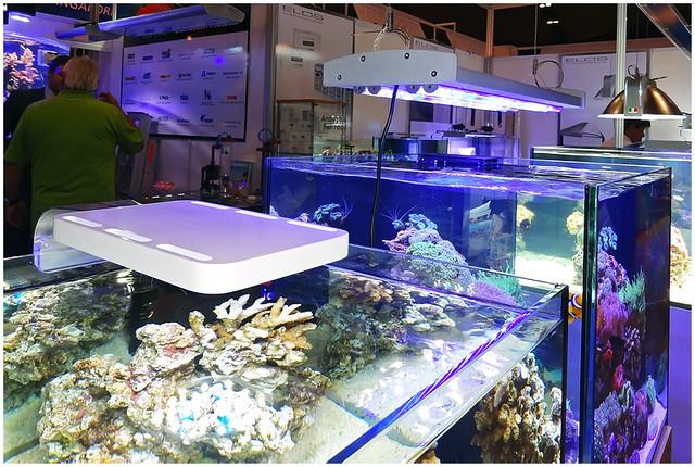 Aquarama_2011-016