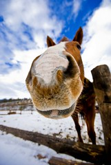 Ok go ahead and take my picture, but DON'T make me look funny!!! (riclane) Tags: ranch horse smile nose funny humorous farm perspective equine horsenose sigma1020 thanksforthesmiles