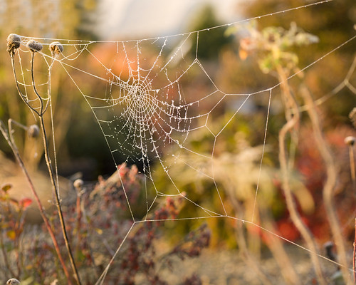 Spider web during sunrise