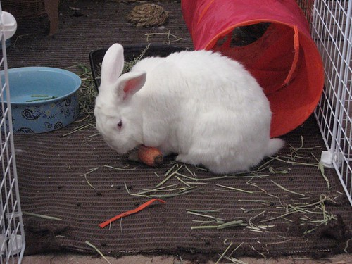 gus and carrot