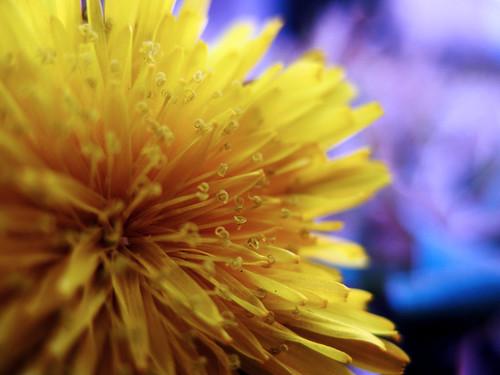 Flowerburst:  January 31, 2009