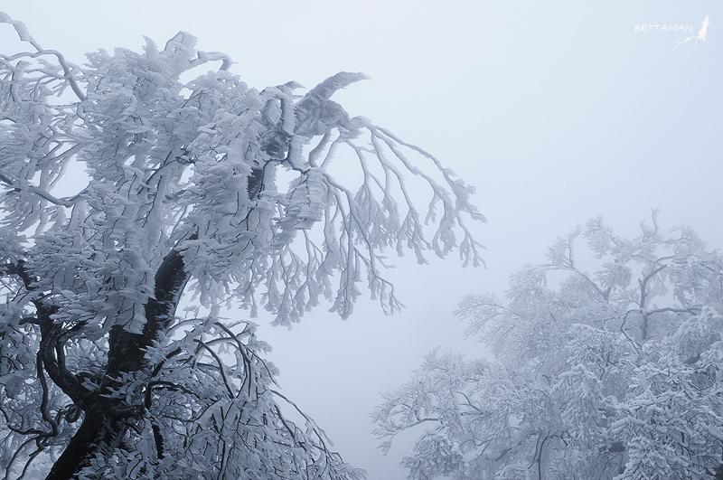 090124 北插天山 台灣山毛櫸 稜線霧淞