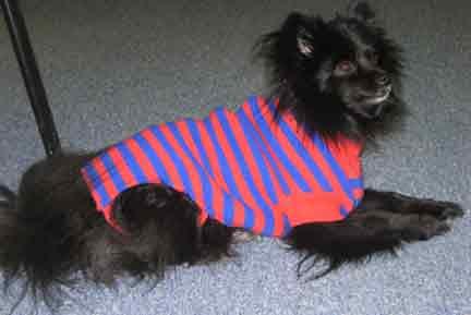 Prissy-Sweater2