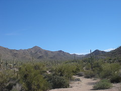 DSC03580 (Puggeroni) Tags: tucson saguaronationalpark