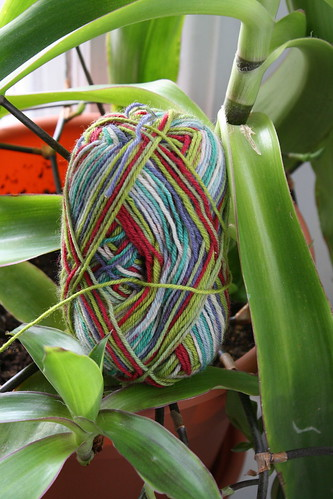 yarn in the wild