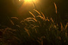 peaceful morning (tropicaLiving - Jessy Eykendorp) Tags: travel light sunrise indonesia glow westjava tamansari bogor efs1022mmf3545usm jawabarat canoneos50d peacefulmorning tropicaliving ciapus vosplusbellesphotos jessyce tropicalivingtropicalliving