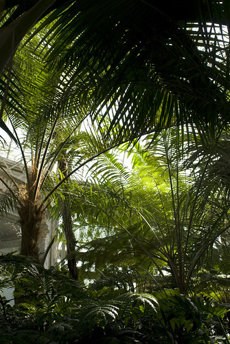 Inside the Palm Dome