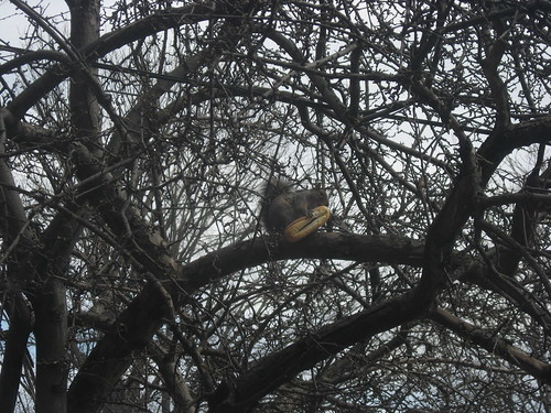 Squirrel Eating Hotdog Bun by you.