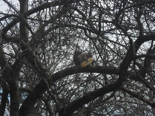 Squirrel Eating Hotdog Bun by you.