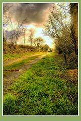 Cornish lane (bobellistuck) Tags: morning trees sky sunlight cornwall peaceful beacon 2009 tranquil bodmin naturesfinest theworldisbeautiful pentaxk10d cornishlane vanagram bobellistuck ~lovephotography~ mwqio