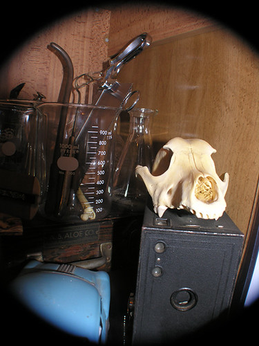 BONELUST - Dog Skull, Vintage Camera & Medical Tools