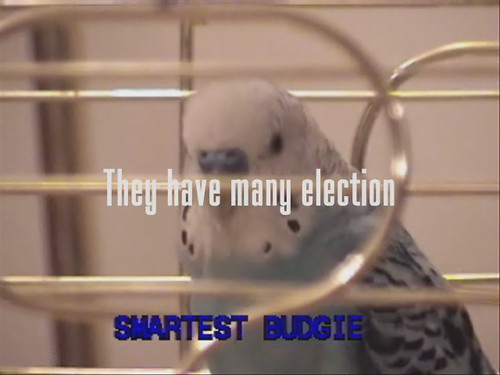 Victor the Budgie On Politics and War