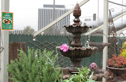edible gardening water fountain