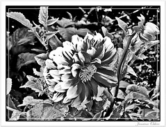 **13 Of July World-Wide Day Of The Rock...** # 400 Explore ( Photography Janaina Oshiro ) Tags: blackandwhite bw naturaleza flower macro nature japan digital natureza flor pb pretoebranco nikond90 worldwidedayrock