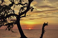 The End is the Beginning (B2Y4N) Tags: ocean sunset sea tree nature silhouette clouds painting golden nikon skies calm tips serene ilocos stopover ilocossur d90 narvacan b2y4n bryanrapadas