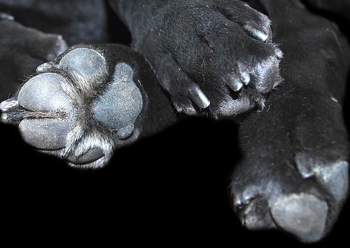 AJ paws