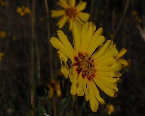 Yellow Flower 04