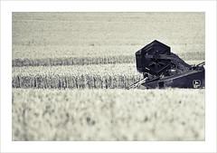 Korn (MaddixLuxx) Tags: korn ernte getreide weizen roggen mhdrescher sigma70200 pentaxk10d ashowoff