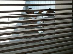 5489 / espionage (janeland) Tags: newyorkcity lines horizontal grey stripes moma museumofmodernart spying louvers linescurves noncoloursincolour