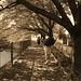 町田樹 画像98