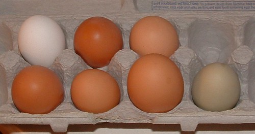 First Seven-Egg Day