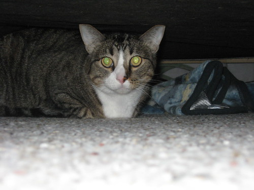 Junior is where you thought hed be - under the bed.