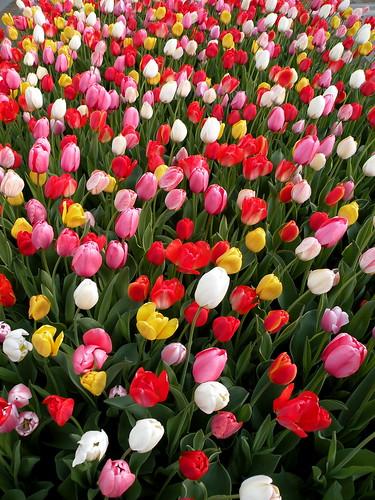 Visit: Longwood Gardens blog image 10