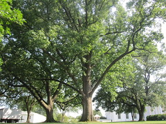 Trees on the front lawn of The White House in Washington, D.C. (RYANISLAND) Tags: usa house news america washingtondc photo dc washington photos president political politics whitehouse landmark american government obama barackobama barack usgovernment thewhitehouse worldnews stockimage