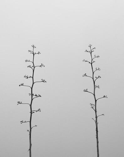 juntos solos | together alone (by Antonio Martínez)