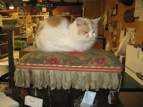 Miss Kitty on Stool