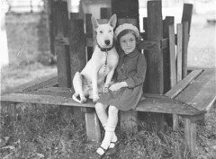 Margaret Shaffhauser with bull terrier dog at the Canine Association Show, 3 Nov 1934 / by Ted Hood (State Library of New South Wales collection) Tags: friends dog pet white cute dogs girl grass bench kid big child ears bull kind chain terrier hund margaret leash dogshow collar maryjanes companion bullterrier mädchen 1934 bestfriends englishbullterrier canis woodbench statelibraryofnewsouthwales thelittledoglaughed tedhood canineassociationshow canineassociation shaffhauser margaretshaffhauser