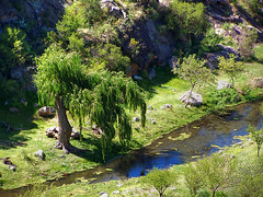 Sauce / Willow (DiEgo bErrA) Tags: tree argentina rio river arbol sauce hills willow cordoba montaas