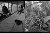 El tiempo pasa. (Felipe Smides) Tags: chile life plaza old boy blackandwhite naturaleza baby flower art blancoynegro nature girl photoshop dead death calle arte time flor centro vieja niña muerte explore human coche vida experience reloj caminar soledad viejo niño felipe wawa humanos sentir parqueforestal marchita andar experiencia guagua tiempo años inocencia columpio humanidad cansancio biología vivir artisticexpression explorar mywinners abigfave aplusphoto beatifulcapture artlegacy artinbw smides fotografiasmides funfanphotos felipesmides